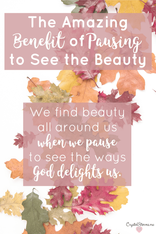 Too often I see the beauty and jump right to the mess. But what if we paused, just a moment or two? Every day we can find amazing things all around us by pausing to see the beauty. We find beauty all around us when we pause to see the ways God delights us.